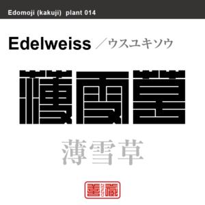 薄雪草 ウスユキソウ 花や植物の名前(漢字表記)を角字で表現してみました。該当する植物についても簡単に解説しています。