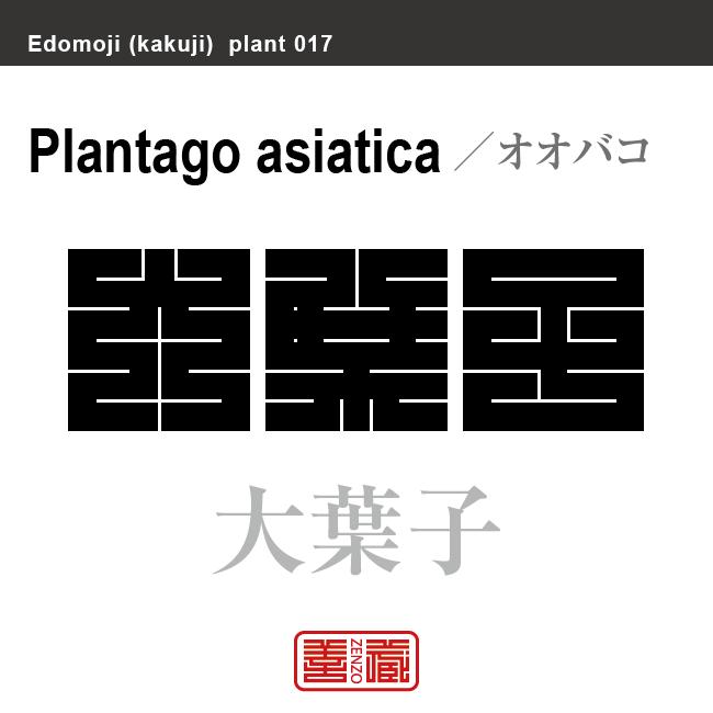 大葉子 オオバコ 花や植物の名前(漢字表記)を角字で表現してみました。該当する植物についても簡単に解説しています。