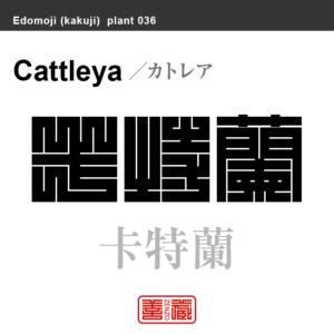 卡特蘭 カトレア 花や植物の名前(漢字表記)を角字で表現してみました。該当する植物についても簡単に解説しています。卡特蘭 カトレア 花や植物の名前(漢字表記)を角字で表現してみました。該当する植物についても簡単に解説しています。