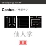 仙人掌 サボテン 花や植物の名前(漢字表記)を角字で表現してみました。該当する植物についても簡単に解説しています。