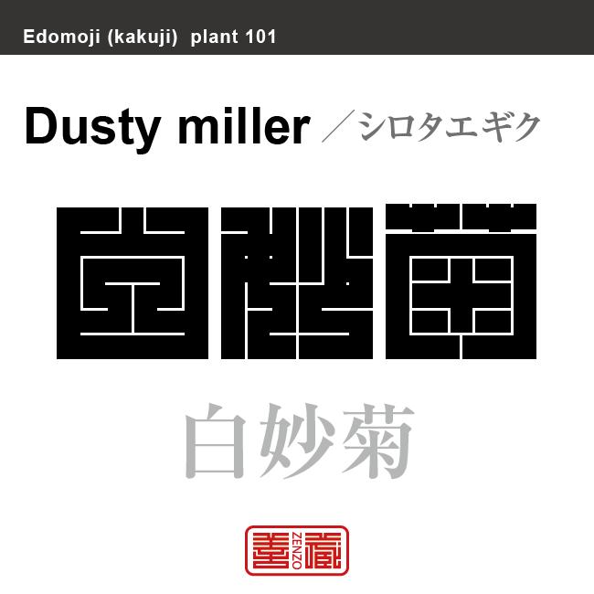 白妙菊 シロタエギク 花や植物の名前(漢字表記)を角字で表現してみました。該当する植物についても簡単に解説しています。