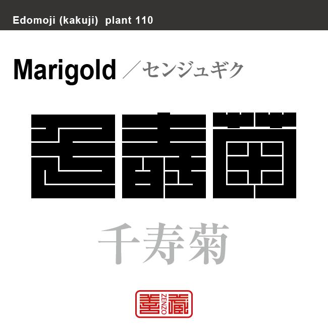 千寿菊 センジュギク マリーゴールド 花や植物の名前(漢字表記)を角字で表現してみました。該当する植物についても簡単に解説しています。